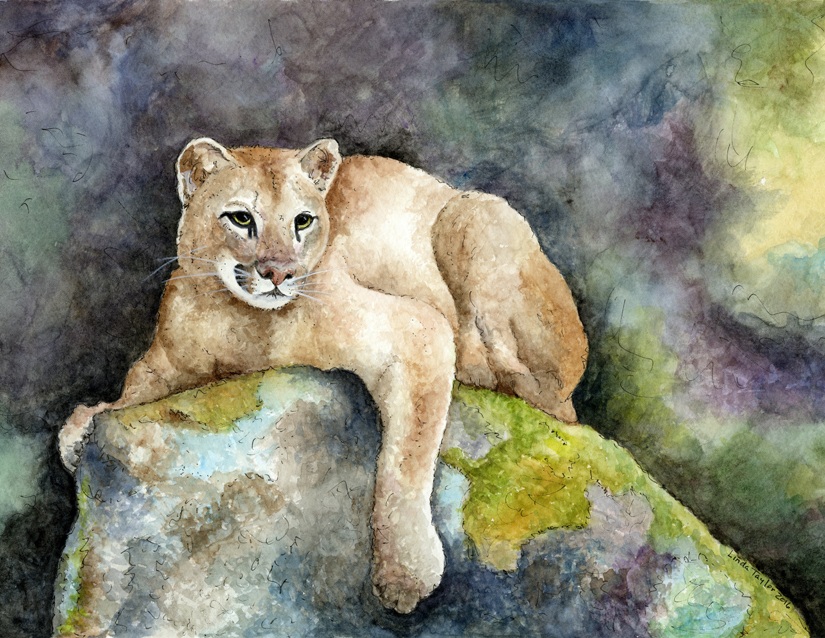 121-cougar-country-1.jpg